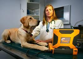 female vet using Ibex ultrasound on adult dog