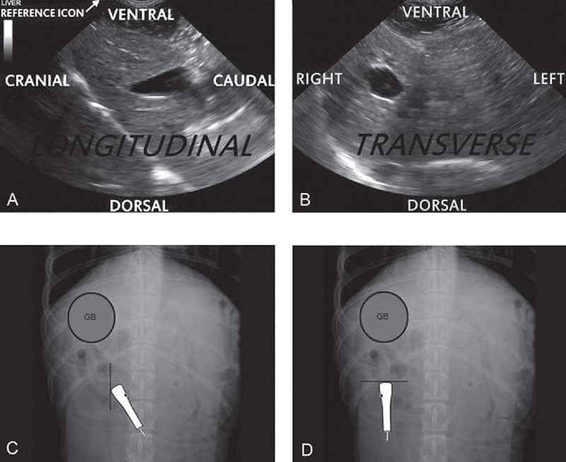 transducer longitudinal and transverse ultrasound image orientation